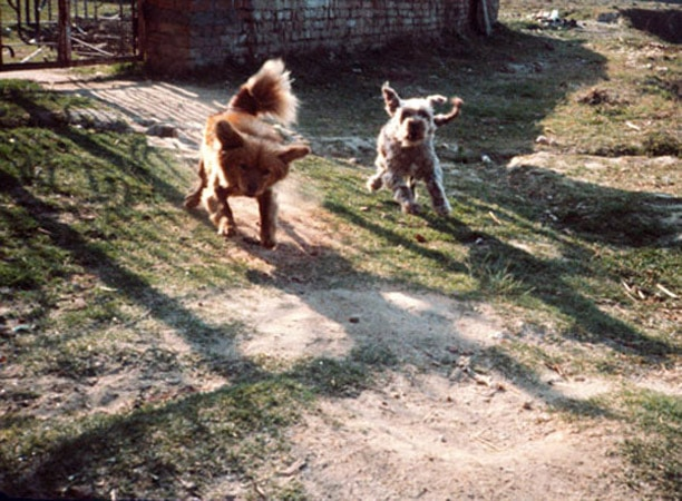 1989, marauding dogs, Marlene's flat, Nepal